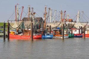 Der Traditionskutterhafen für Fischkutter Fedderwaddersiel liegt nur 6km entfernt und bietet neben einem gut sortierten Frischfisch-Geschäft auch ein Küstenmuseum, Kutterfahrten und etliches mehr.